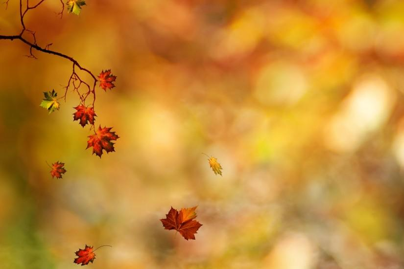 Fall Leaves Background 6016 2560x1600 px High Resolution Wallpaper .