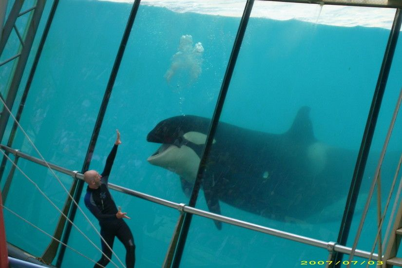 (killer whale wallpapers, killer whales wallpaper, orca whale wallpaper )