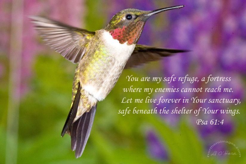 hummingbirds and flowers wallpaper