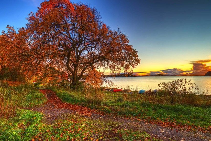 2560x1600 Fall Leaves in Autumn Wallpaper | Wallpaper Download