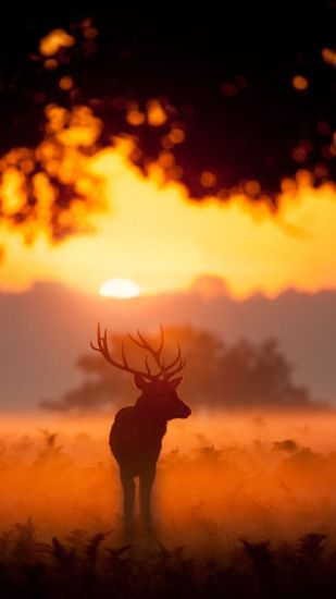 Elk Animal Wandering Sunset Grassland #iPhone #6 #wallpaper