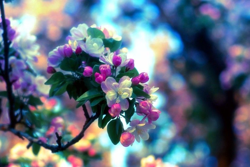 Apple Spring Tree Twigs Colors Blossoms Flower Desktop Wallpaper