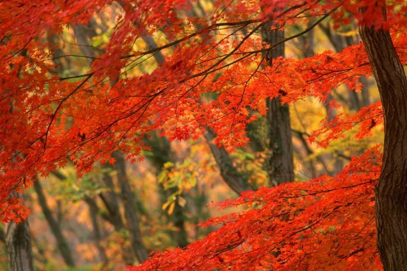 Preview wallpaper autumn, leaves, branch 1920x1080