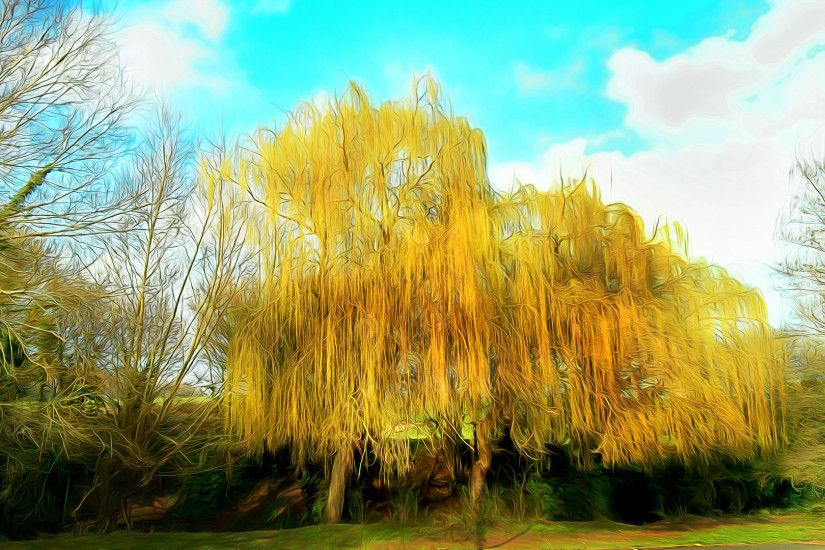 Golden Weeping Willow by Metaoxic Golden Weeping Willow by Metaoxic