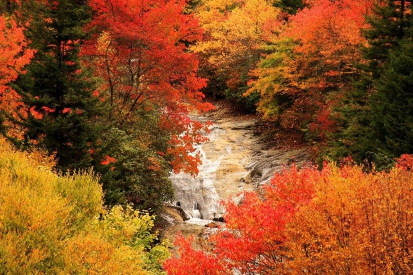 fall animal pictures | ... fall forest hd wallpaper fall in the forest  mountains