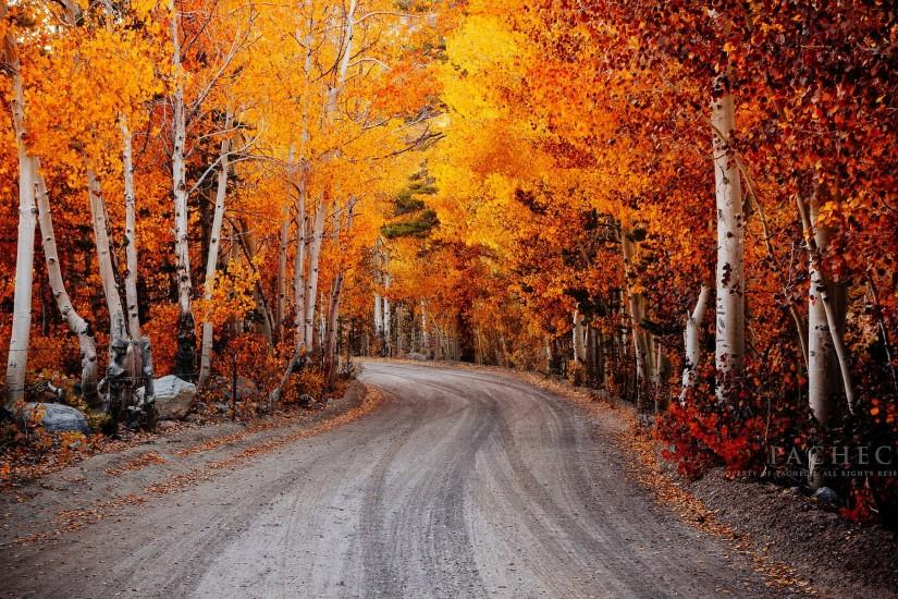 Man Made - Road Landscape Foliage Tree Fall Colors Wallpaper
