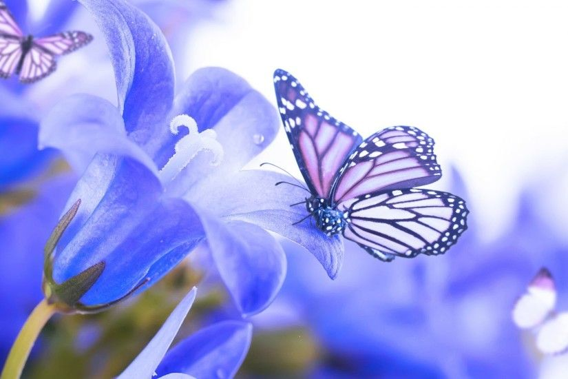 Blue Beautiful Butterflies Nature Simply Flowers Butterfly Flower Wallpaper  And Backgrounds