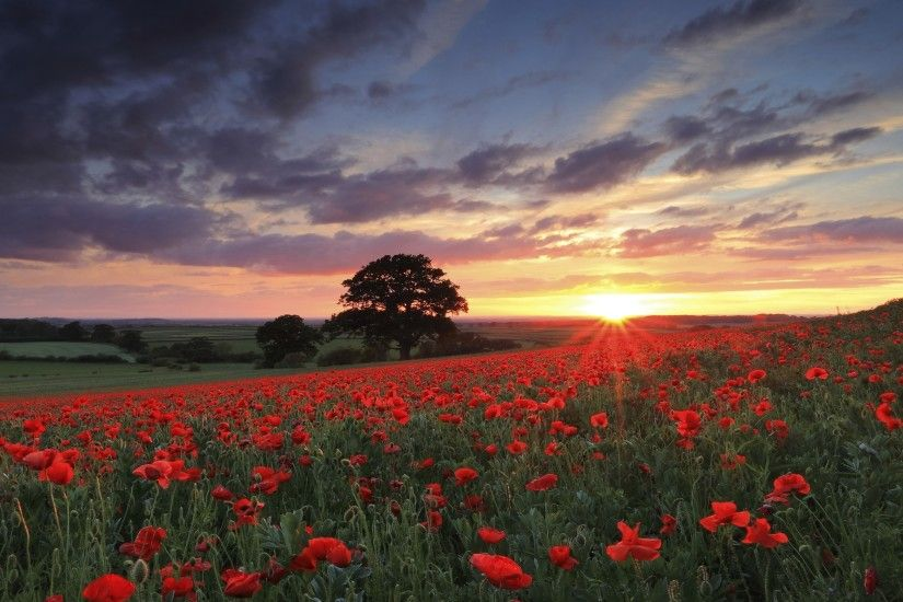 nature, Landscape, Photography, Flowers, Poppies, Sunset, Spring, Field,
