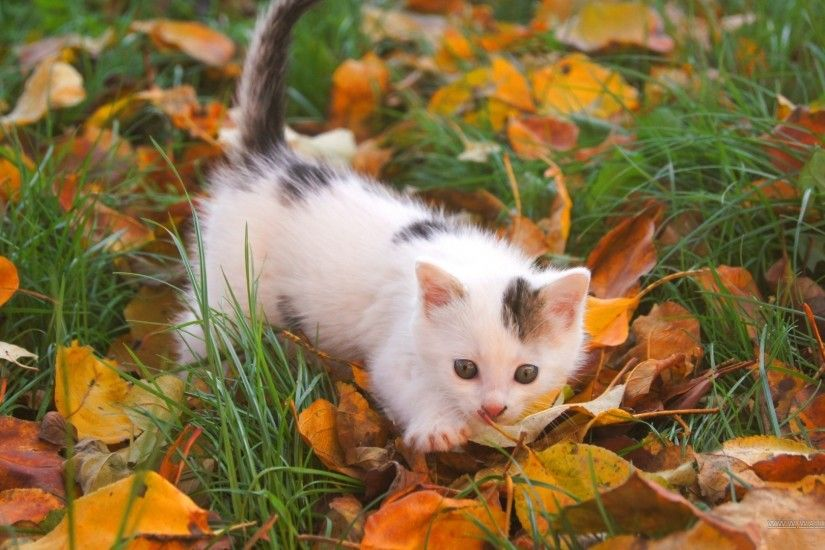 1920x1080 Wallpaper kitten, baby, spotted, leaves, autumn