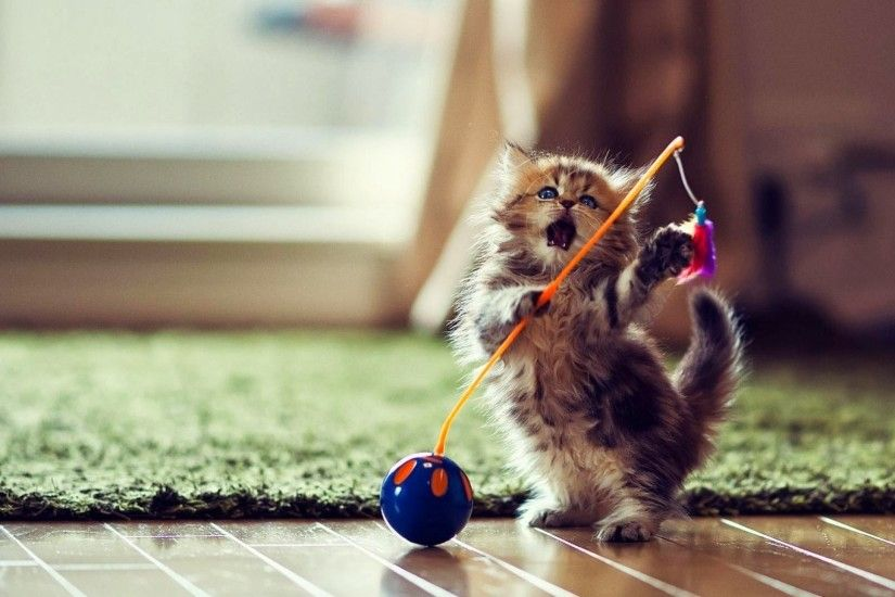 Funny Cute Cat Playing Wallpaper Desktop Wallpaper