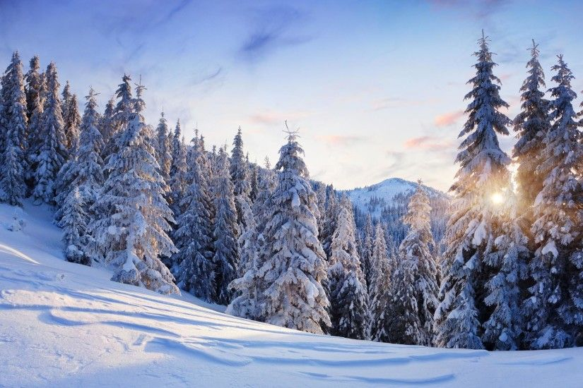 cool nature landscapes trees forest mountains winter snow seasons sun  sunlight sky clouds white cold best