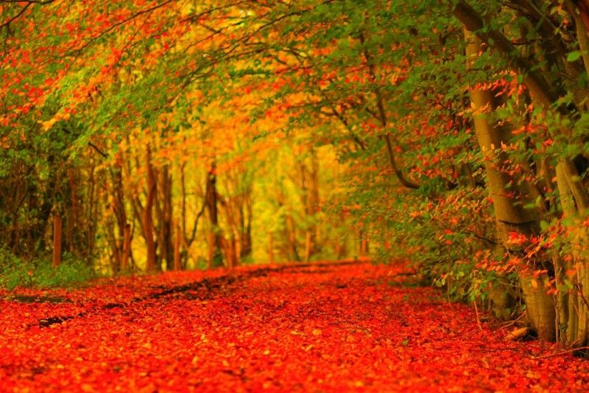 Widescreen Desktop Wallpaper Autumn | Wide Wallpapers