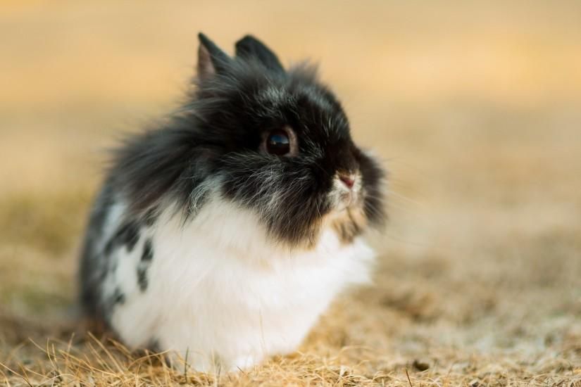 Cute bunny hd Wallpapers Pictures Photos Images. Â«