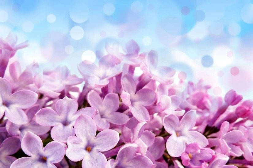 pale red-violet flowers beautiful purple flower blue background reflections