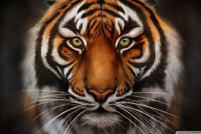Tiger Graffiti Wallpaper Save The Tiger Hd Desktop Wallpaper Widescreen  High Definition