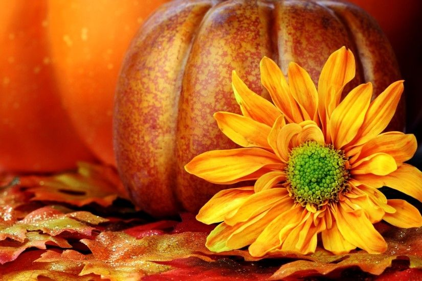 Pumpkin Wallpaper Backgrounds hd wallpaper, background desktop .