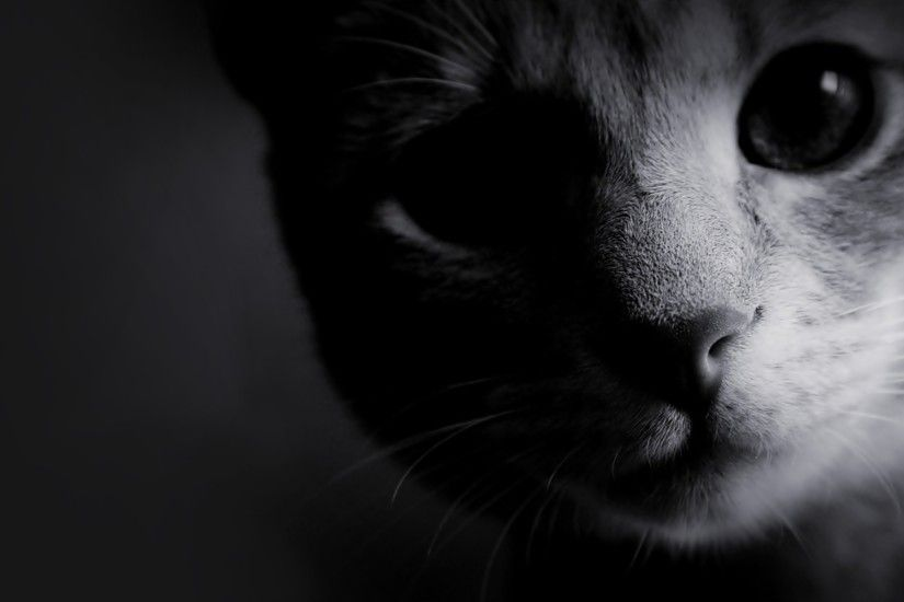 black and white photos | black and white cats Wallpaper