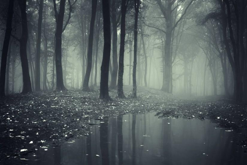 cool forest wallpaper 3840x2160 download