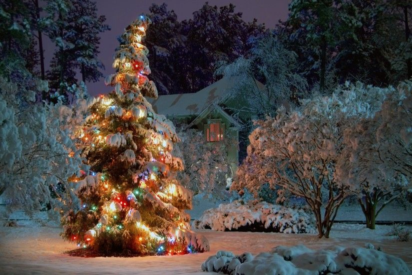 Beautiful Christmas Tree Wallpapers (13)