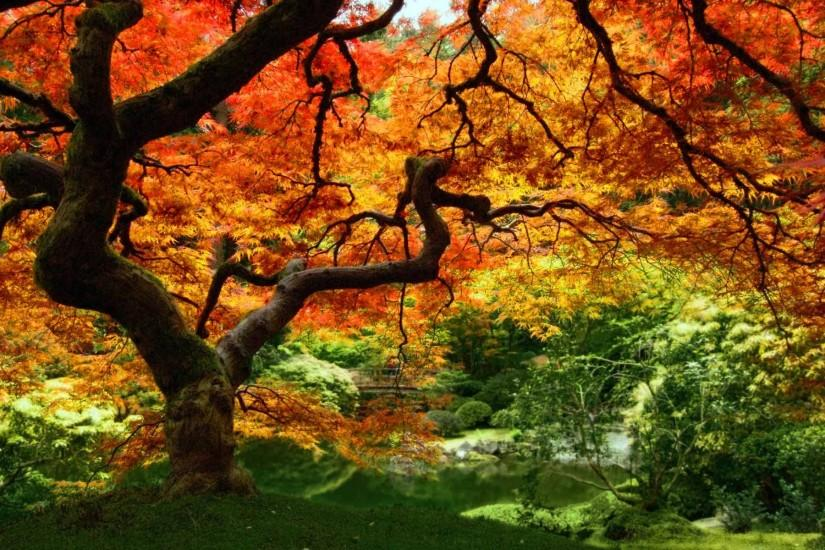 cool fall desktop backgrounds 1920x1200 tablet