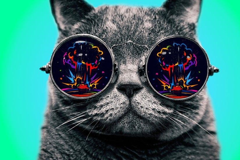 Cat With Cool Glasses Hd Wallpaper | Wallpaper List