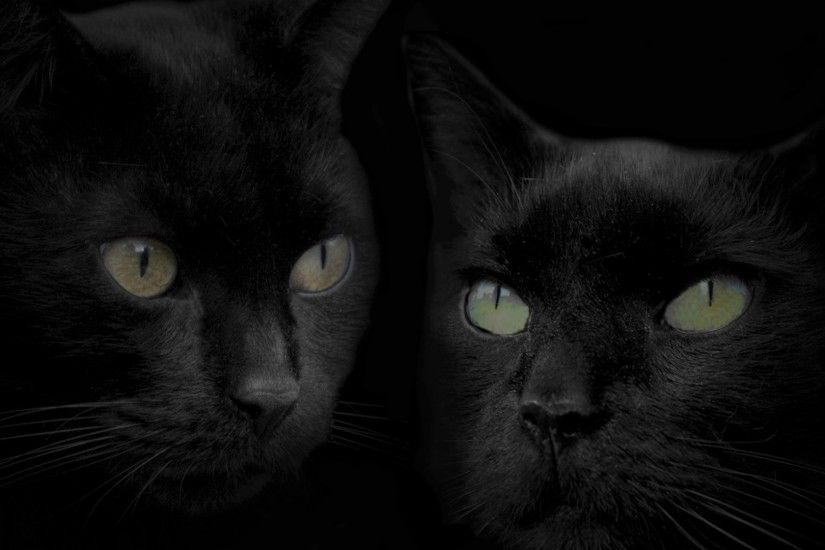 Halloween Cat Wallpapers - Wallpaper Cave Black ...