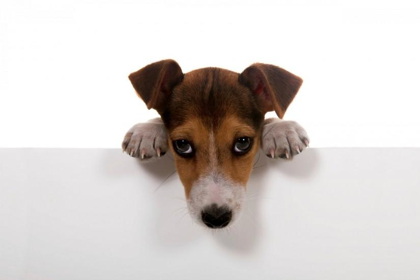 dogs dog puppy dog. feet wall white background wallpaper