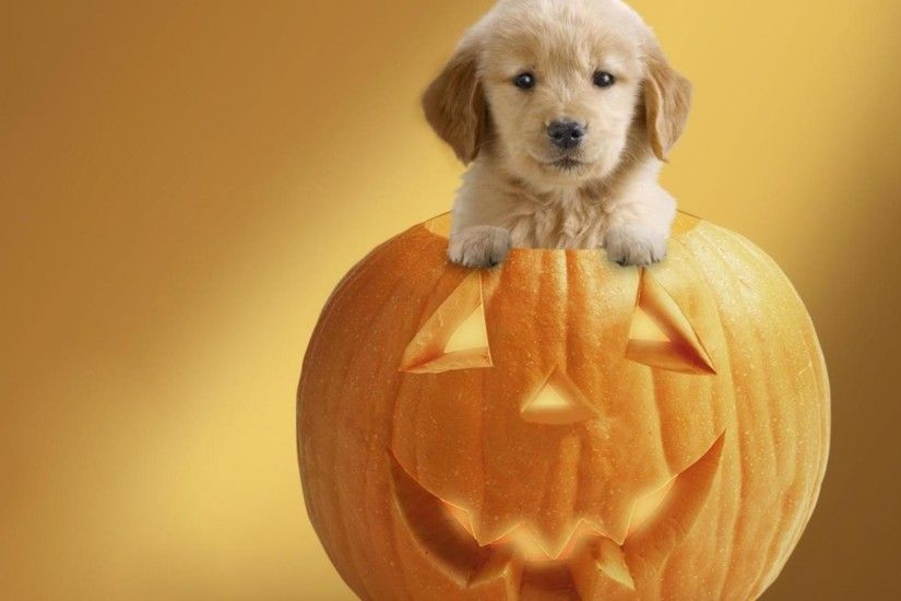 Cute Halloween Wallpapers Desktop