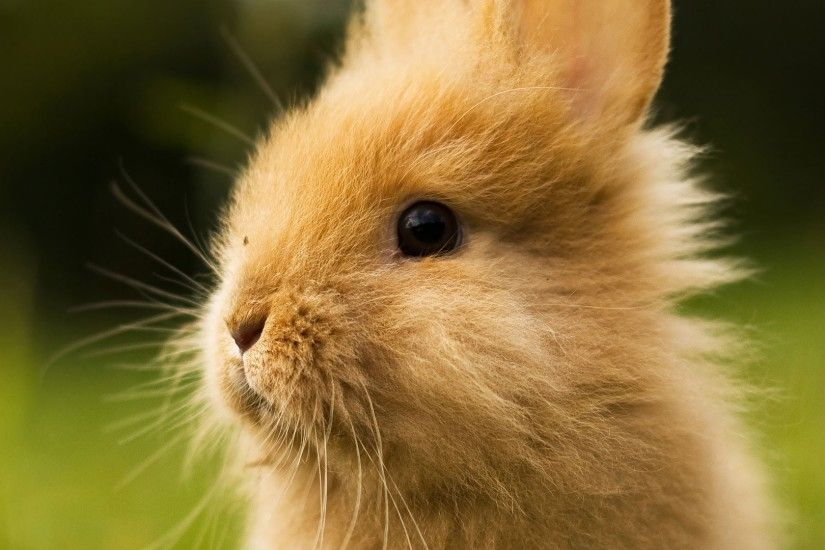 Cute Bunny Pictures Images on