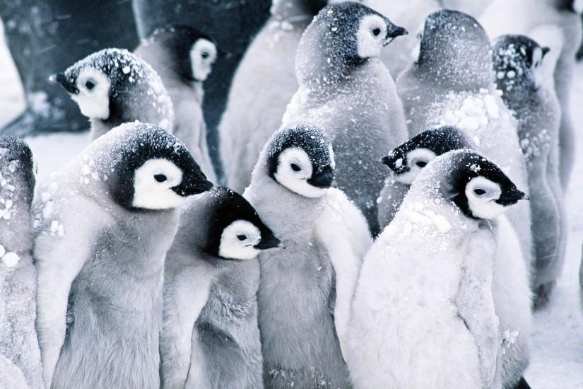 Penguin Wallpapers - Full HD wallpaper search