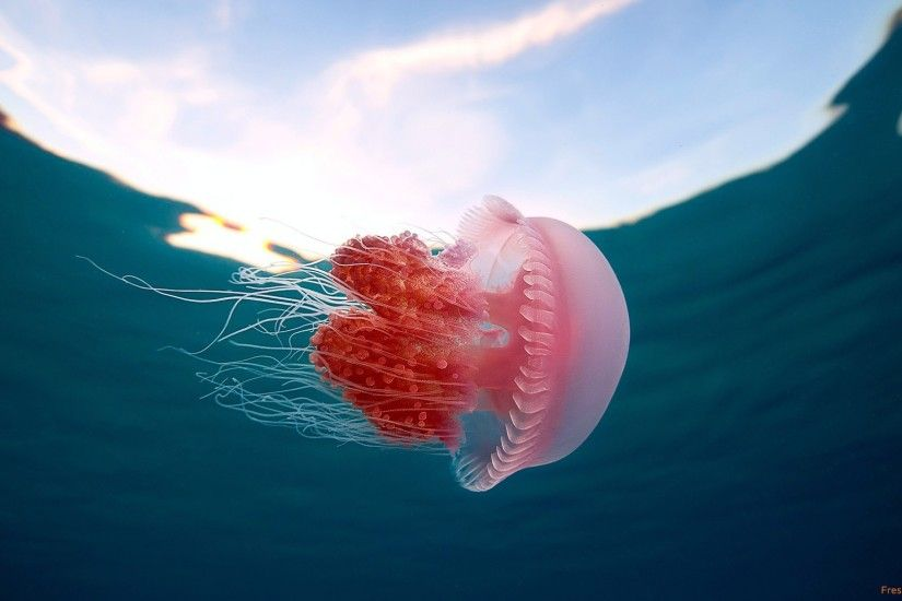 136 Jellyfish HD Wallpapers Backgrounds Wallpaper Abyss - HD Wallpapers
