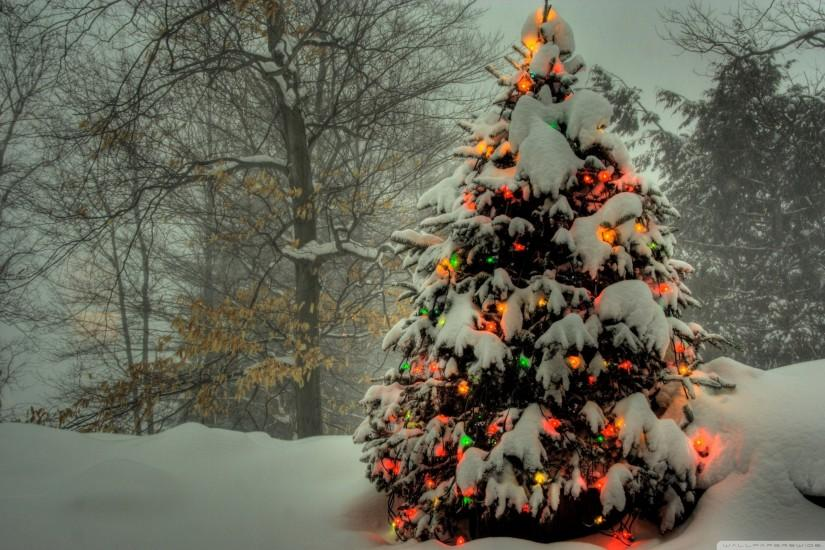 popular christmas tree wallpaper 2560x1600