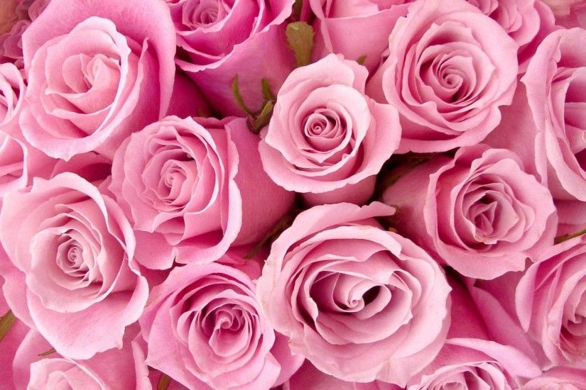 Pink-HD-Rose-Wallpapers-desktop-backgrounds.jpg