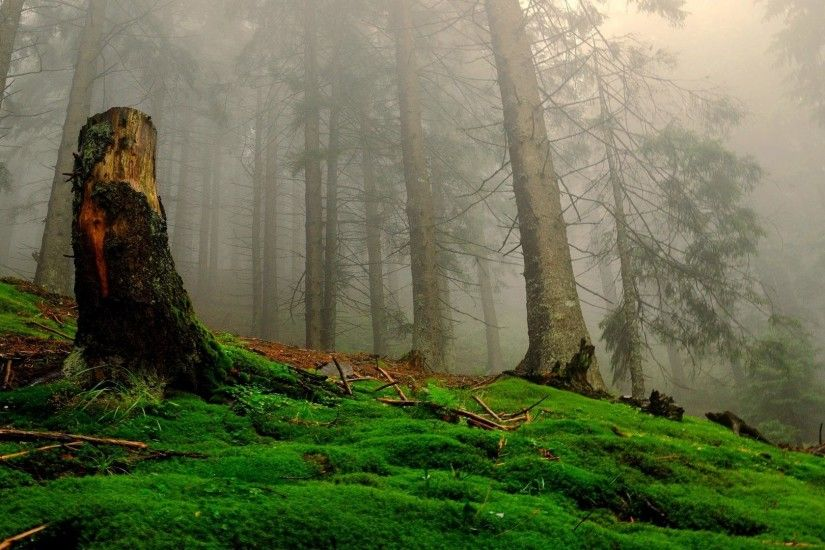 ENCHANTED FOREST Sunlight Mist Fog Green Wallpaper