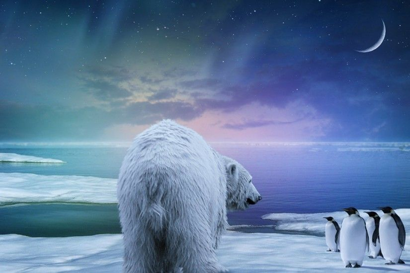 Preview wallpaper polar bear, penguin, northern lights 2048x1152