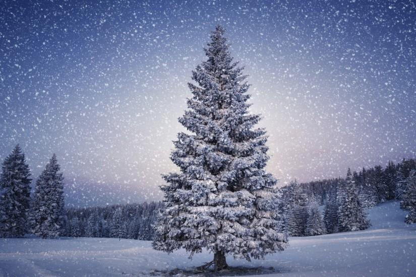 beautiful christmas tree wallpaper 2560x1600