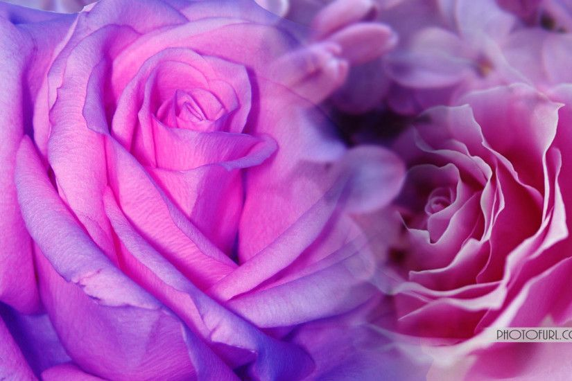 Cool Pink and Purple Backgrounds | Pink And Purple Flowers Background Hd  Cool 7 HD Wallpapers