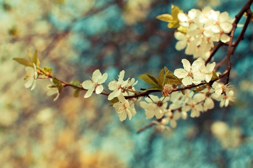 Beautiful-Desktop-Spring-HD-Wallpapers-1920x1200