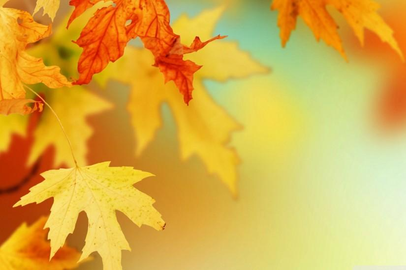 Wallpapers For > Fall Leaves Wallpaper Vector