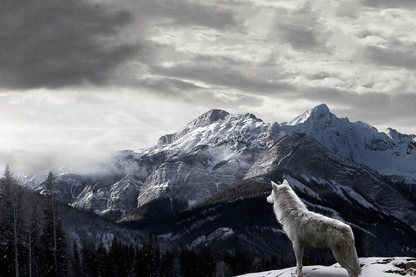 10. lone-wolf-wallpaper-HD10-600x338