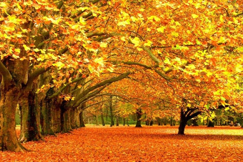 1281 Fall Backgrounds
