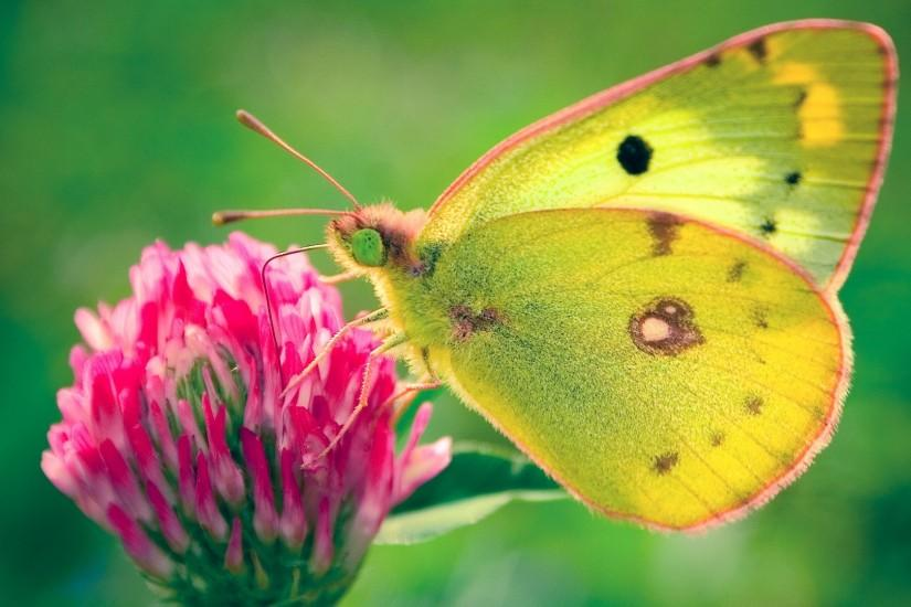 Most Beautiful Butterfly Photography