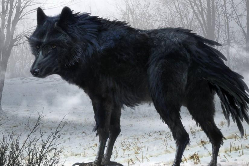 Wallpapers For > Black Wolf Wallpaper Hd