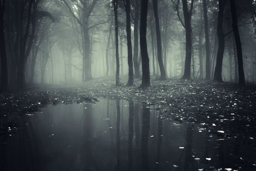 Dark Creepy Forest Wallpaper