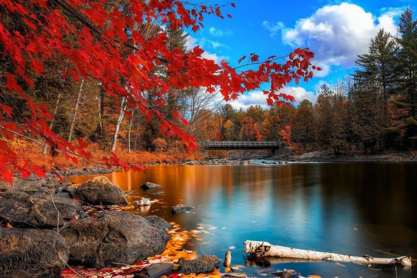 Colorful Autumn Lakeside Trees