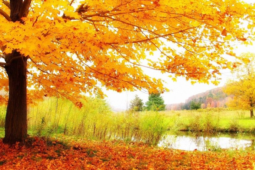 Wallpapers For > Beautiful Fall Scenery Background