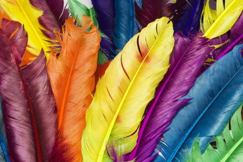 Feathers in Colors