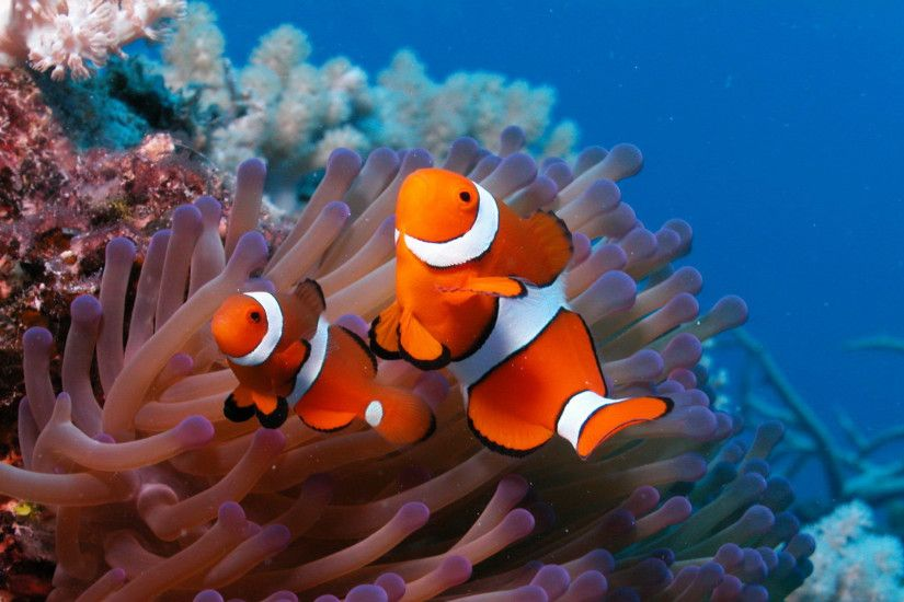 Underwater World HD Wallpapers 1600×1200 Wallpapers Underwater (36  Wallpapers) | Adorable Wallpapers