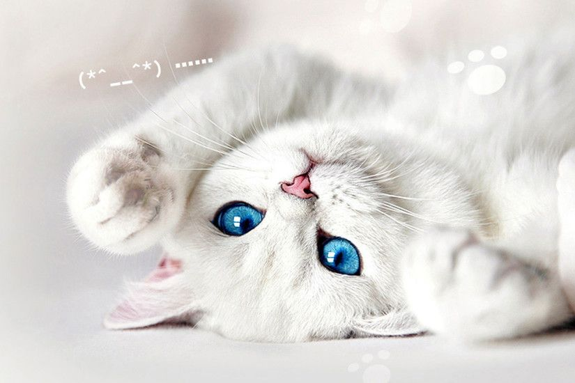 Hd Pics Photos Very Cute White Cat Inverted Quality Desktop Background Wallpaper