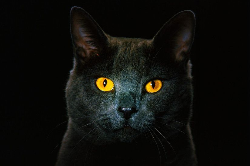 Black Cat Wallpaper 15892